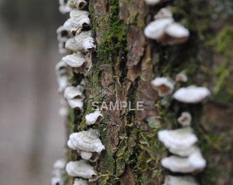 Flora #4 - fungi on tree - DIGITAL DOWNLOAD