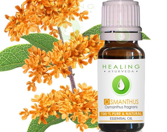 Osmanthus blossoms/Sweet Osmanthus, Fragrant Olive, Osmanthus Blossoms essential oil. Natural Flower essential oil