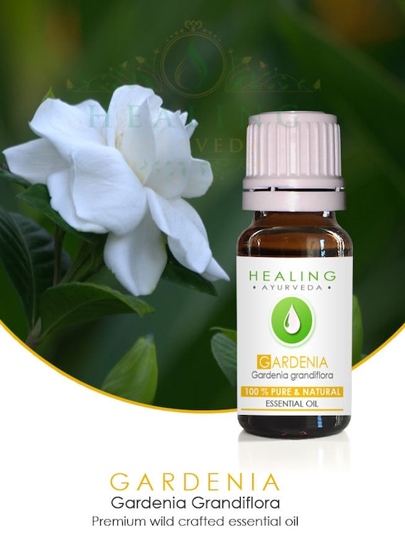 Gardenia essential oil, 100% Pure essential oil, Natural Gardenia flower oil, Wild crafted Gardenia Grandiflora, Premium Aromatherapy oil