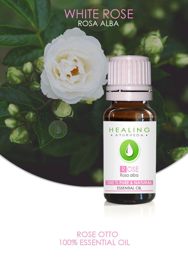 White Rose Otto- Rosa alba essential oil- 100% Rose oil- Rose ...