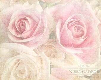 September Roses Fine Art Print