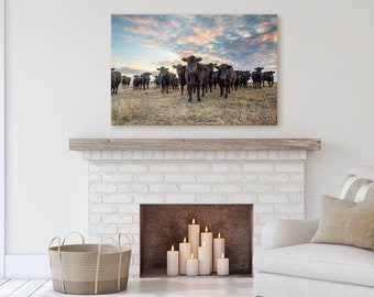 Black Angus cow canvas, western decor cow photo print, oversize wall art, cattle photo as a large wrapped canvas or framed print.