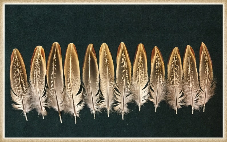 US Seller 12 Beautiful Natural Hen Pheasant Wing Feathers