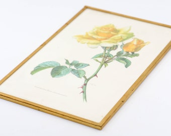 "botanical flower yellow gold rose framed French vintage floral litho print gold metal wall art mid century mod country home 19c61 10"" x 6.5"""