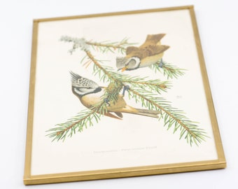 botanical bird print John Murr 1956 German vintage gold frame wall art ornithology European crested tit mid century modern country home 1956