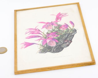 """botanical flower pink pleione framed French vintage floral litho print gold metal wall art mid century modern country home 19C57 10"""" x 6.5"""""""