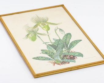 """botanical flower paphiopedilum framed French vintage floral litho print gold metal wall art mid century modern country home 19C60 10"""" x 6.5"""""""