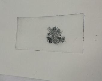 Print of organic form white
