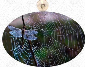 Suncatchers -  Large Glass Dragonfly and Web - Four Different Photos  to Choose From