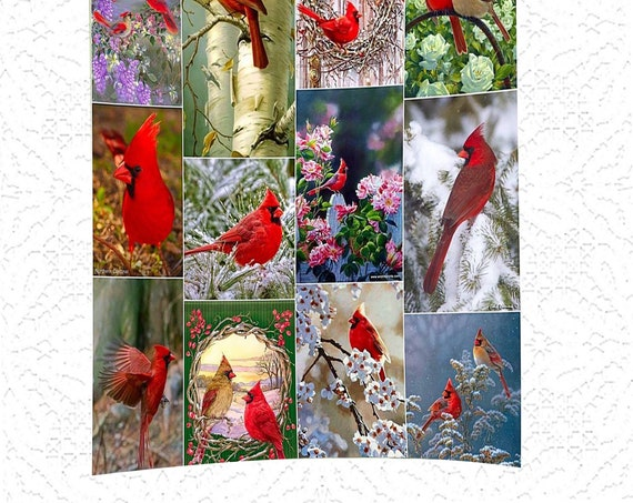 "Acrylic Photo Panel -  8""x 10"" - Cardinals - Flower - Cardinal - Daisies - Baby - Dragonfly - Swimmer"