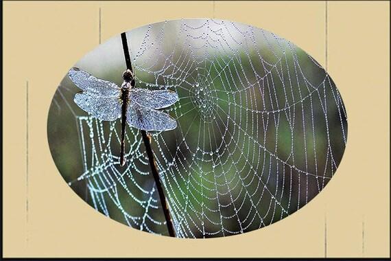 Glass Suncatcher - lg  Dragonfly