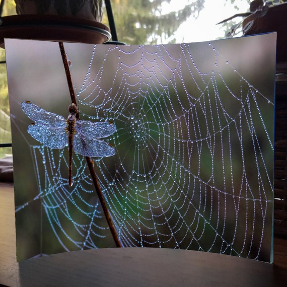 "Acrylic Photo Panel - 8""x 10"" - Dragonfly - Swimmer - Cardinal -"