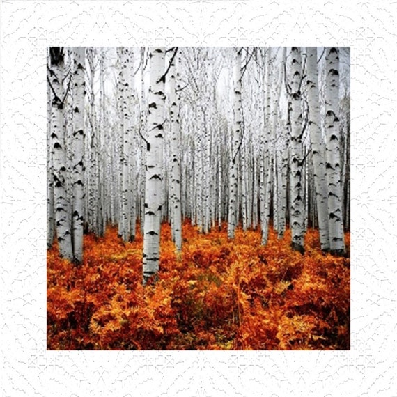 White Birch Trees - Aluminum Photo Panel
