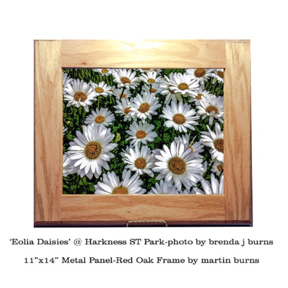 Daisies - Aluminum Photo Panel - Wall Decor