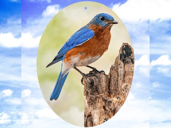 Bluebird - Suncatcher