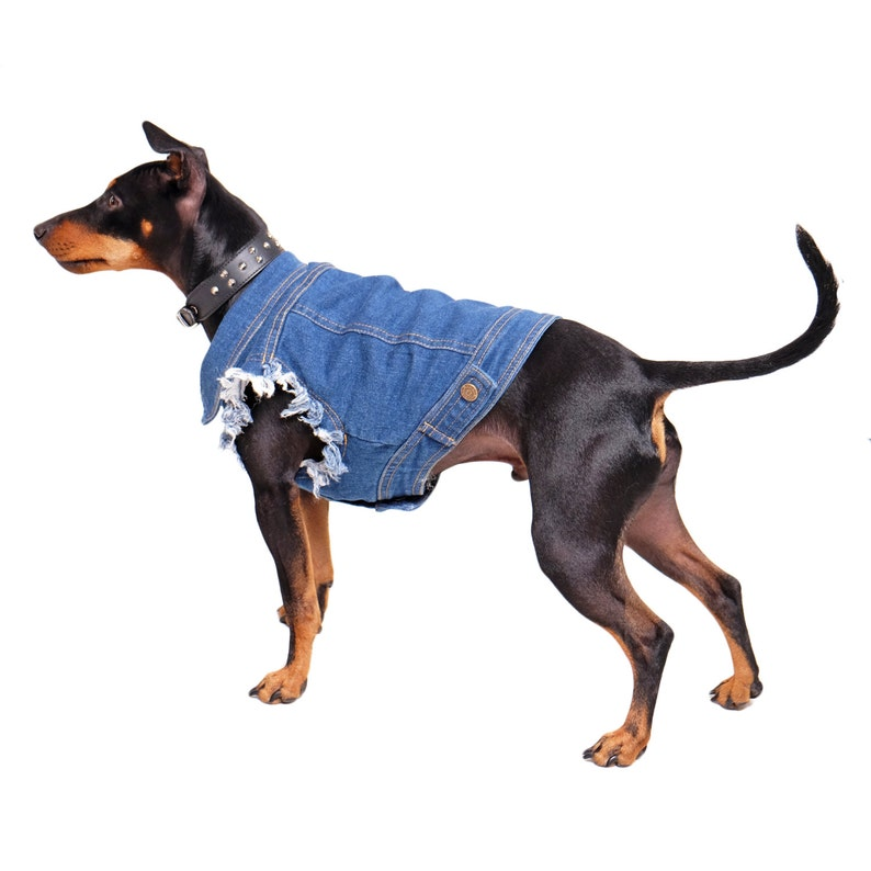 Denim Dog Jacket / Denim Dog Vest /Dog Coat / Dog Denim /  Dog image 0