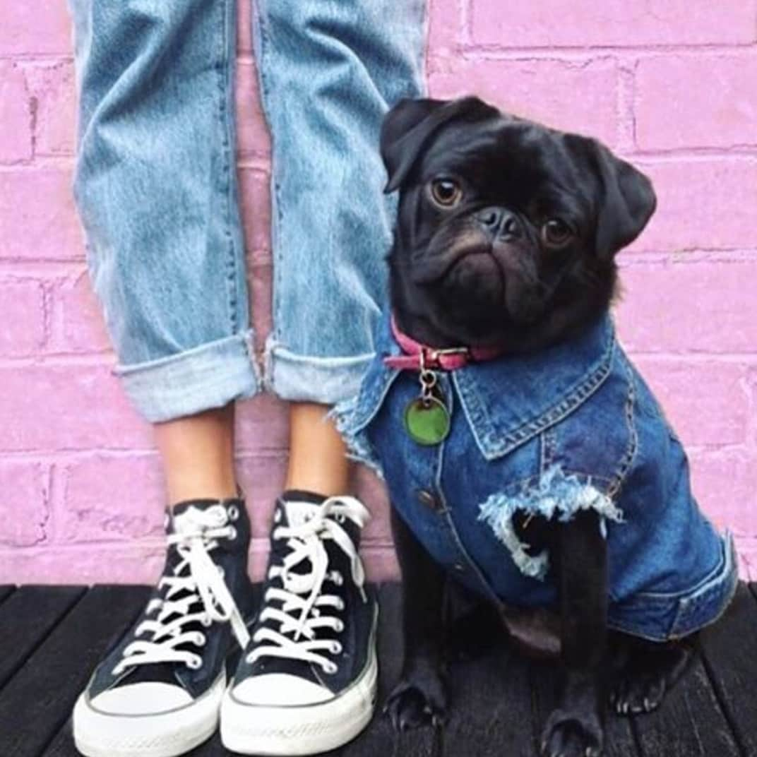 Dog Jacket / Denim Dog Jacket / Dog Vest / Cool Denim Dog Vest / Cool / Dog Jacket / Dog / Pethaus 5e04d3