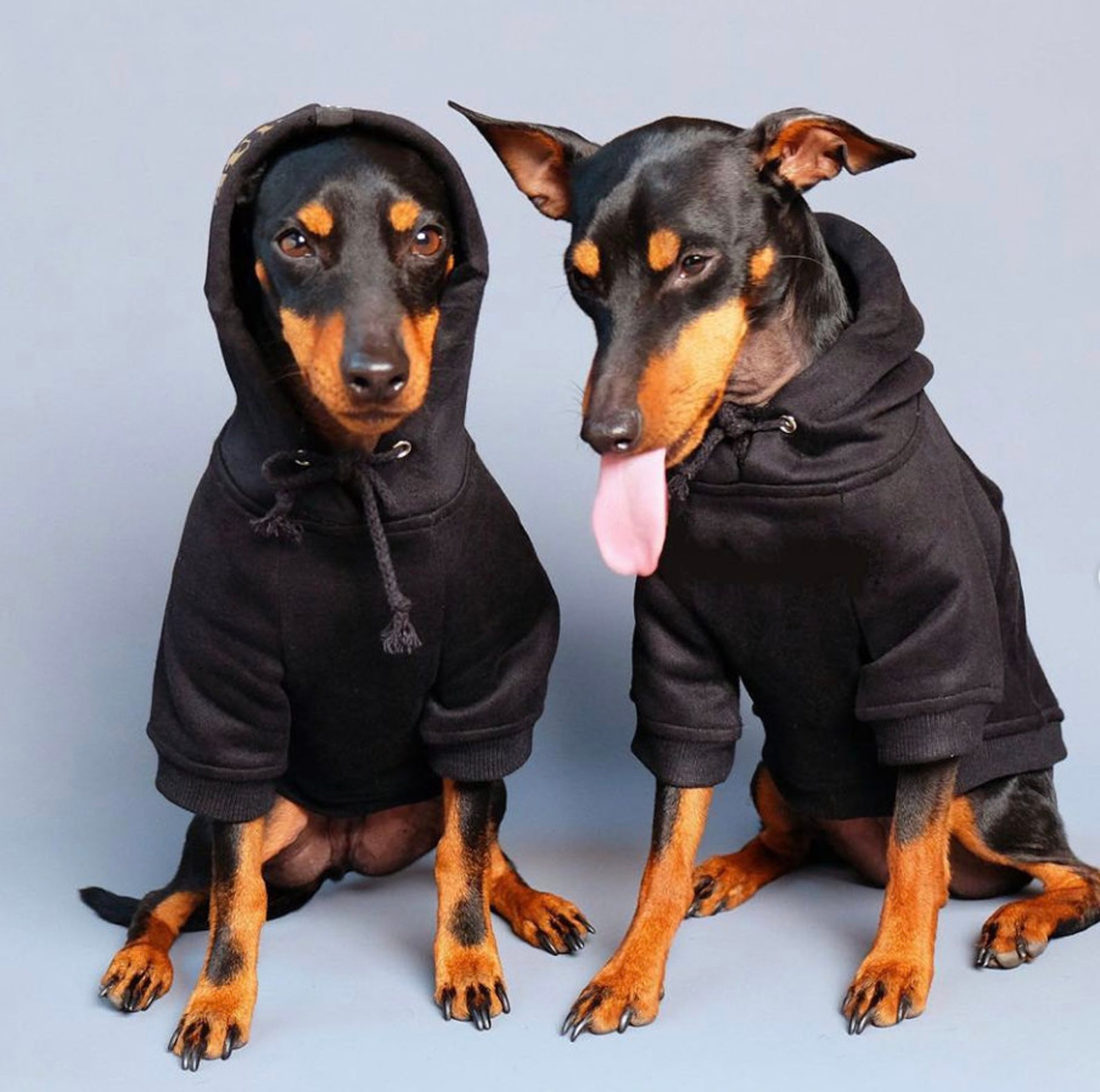 Two dogs wearing a black hoodie