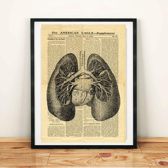 Humano pulmones antiguos anatomía Vintage para imprimir | Etsy