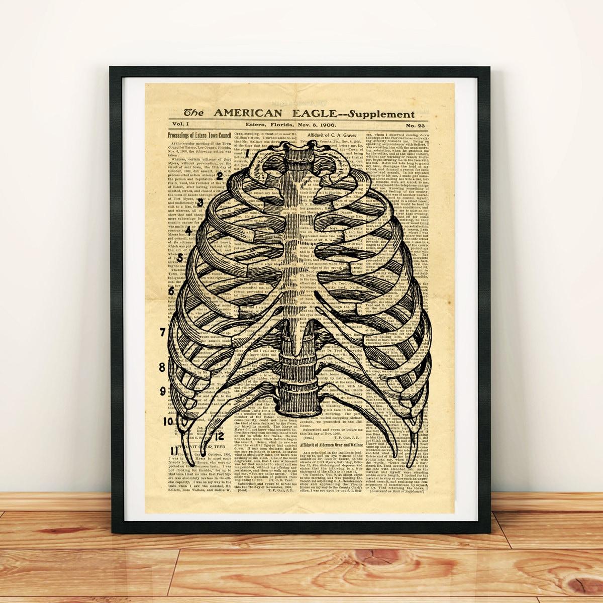 Menschliches Skelett Thorax Knochen Antik Anatomie Vintage | Etsy