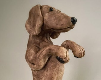 The Dachshund - Meet Jack!