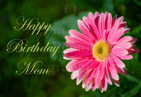 Happy Birthday Mom Greeting Card With Pink Gerber Daisy 5x7 Etsy