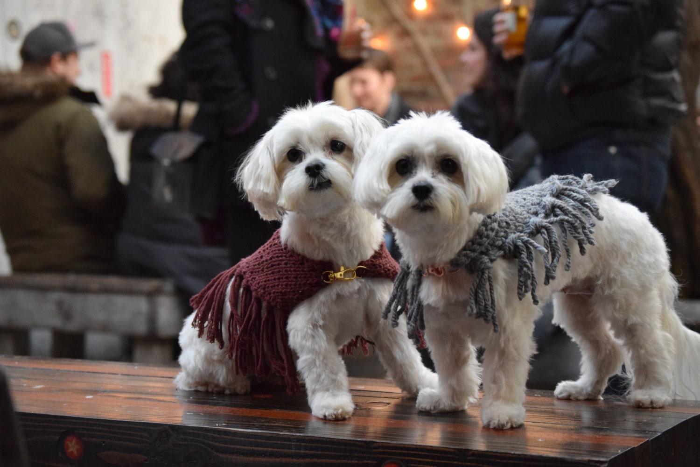 La tricot main en tricot La châle franges pour chiens en marron c33285