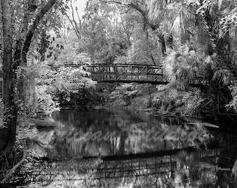 Florida Swamp, Wilderness Park Bridge