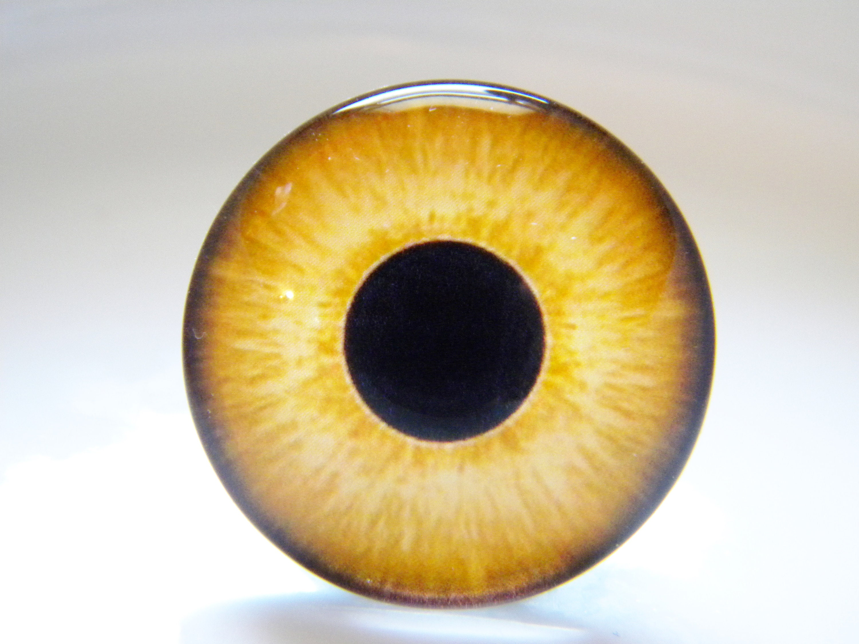 Glass eyes, owl eyes, bird eyes, yellow eyes, yellow owl eyes, falcon eyes,  taxidermy eyes, doll eyes  One Pair - Choose size from menu