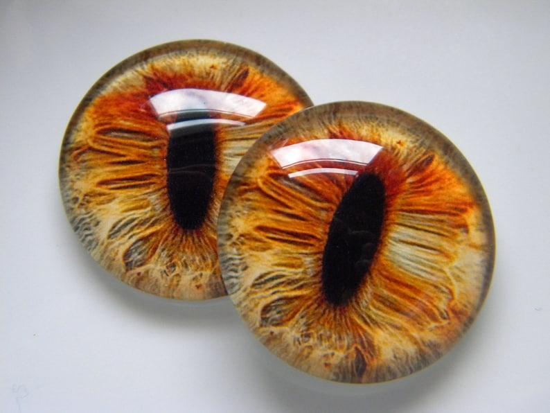 Glass eyes fox eyes golden eyes cat eyes animal eyes image 0