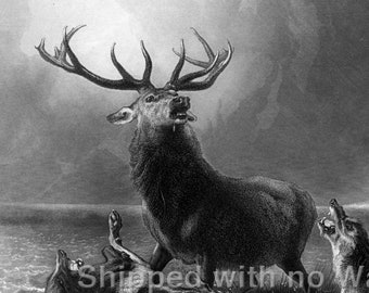 """THE STAG AT BAY Engraving Reproduction 18/""""x24/"""""""
