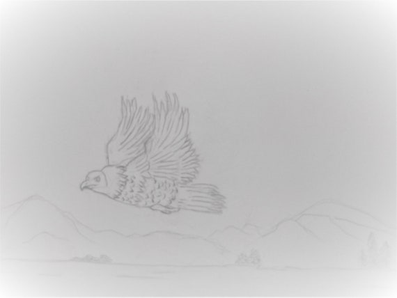 Bald Eagle in Flight Coloring Painting Page Original Drawing Sketch by Rosie Foshee Instant Digital Download