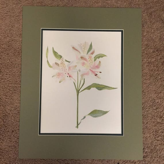 Alstromeria Cultivar, watercolor, florals