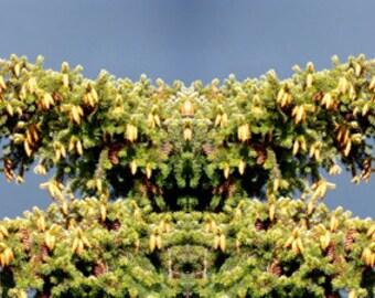 Horned Tree