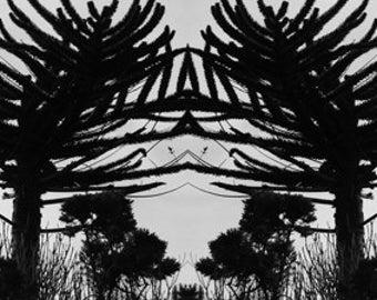 Uist Tree