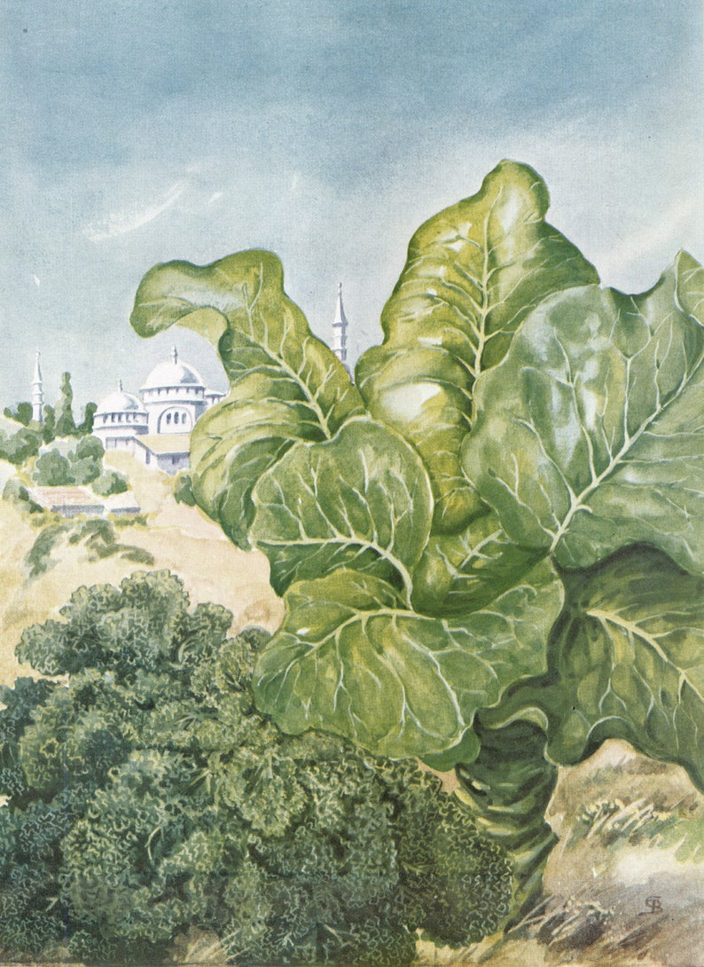 Astounding 1949 Vegetable Garden Art Kale Collard Greens Botanical Illustration Greek Orthodox Church Illustration Interior Design Ideas Gentotryabchikinfo