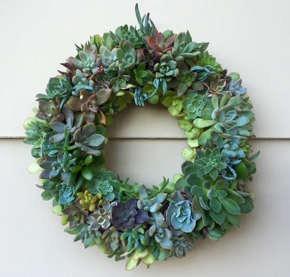 Diy 9 Kit Succulent Wreath The Perfect Gift For Yourself Or Your Loved Ones