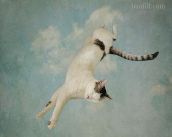 Surreal cat photo. Fine art photograph. Whimsical animal portrait. Wall art, kid's room, nursery print. Renaissance sky, clouds. Flying Cat