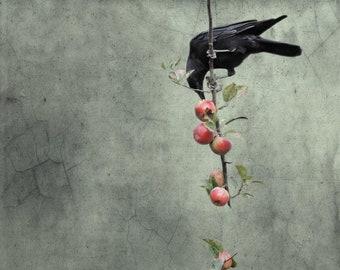Fine art crow photograph. Bird photography. Moody, dark colors, blackbird. Vintage, grunge, goth. Wall art. Branch of Knowledge