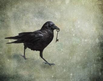 Fine art crow photograph. Surreal bird photography. Moody mystery, goth fairy tale. Blackbird, wall art. Keeper of the Key