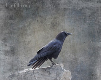 Fine art crow photograph. Raven, blackbird, crow bird photography. Moody dark goth colors. On Top of the World