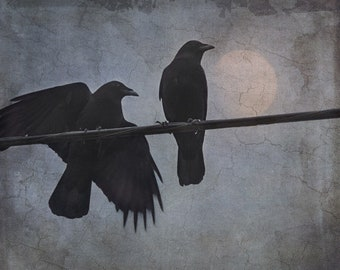 Fine art photograph. Crows at night under the moon. Bird photography. Moody surreal dark goth colors. Night Watch