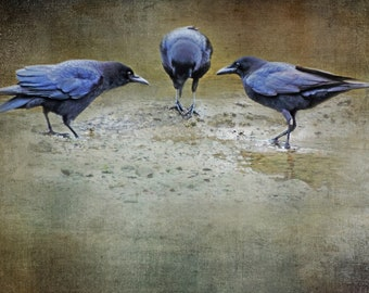 Fine art crow photograph. Moody, dark colors, blackbirds on beach. Bird photography. Vintage, grunge, goth. Wall art. The Meeting
