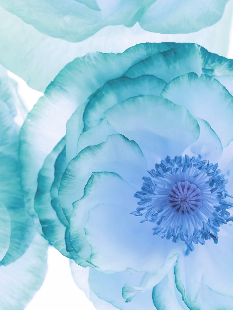 Blue Wall Art Teal And Blue Flower Print On White Background Etsy