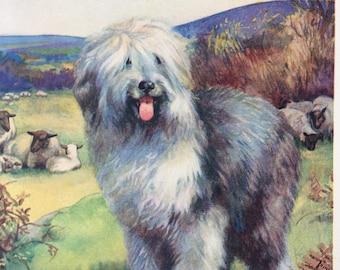 1932-Book Plate-Dog-Old English Sheep Dog-Sheep-Farm-Matted-Nursey-Home-Wall decor