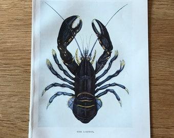 Original-1907-Book Plate-Natural History-Ocean-Sea Shore-Lobster-Beach-Beach House-Home-Bathroom decor