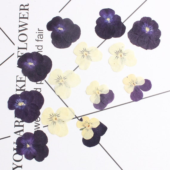 30Pcs Real Pansy Pressed Dried Flowers Natural Pressed Flowers for Art Craft DIY Resin