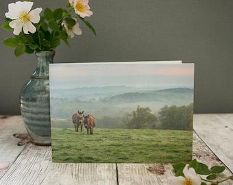 Donkey card, photographic card, animal card, blank greeting card, fine art card, fine art photography, birthday card, cute: Donkeys At Dawn