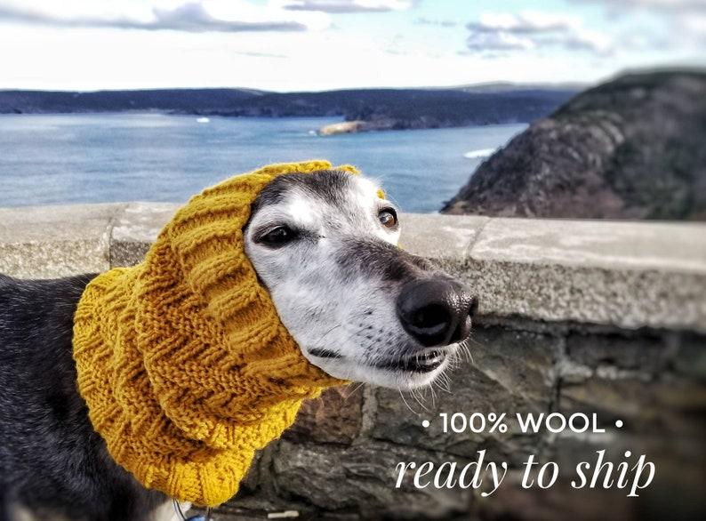 Neck Warmer Ready to Ship Winter Dog Scarf Handknit Greyhound Sighthound Gold Mustard Wool Dog Snood FREE SHIPPING! Galgo Whippet
