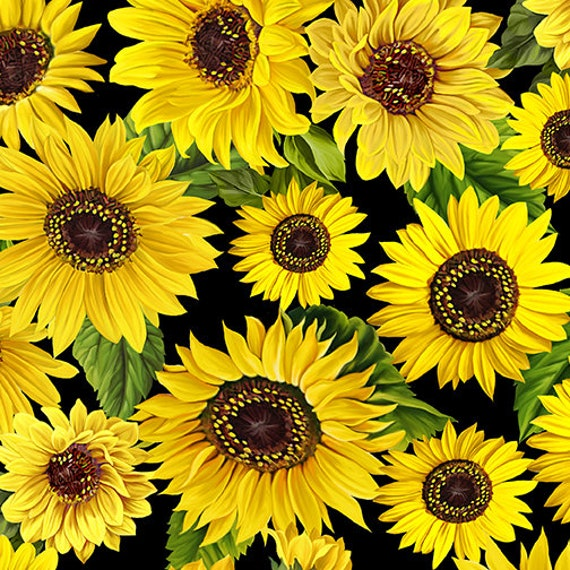 Kanvas Fabric Sunflower Sunrise Fabric Collection